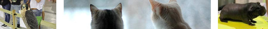 Imagenes de la feria Mi Mascota 2014